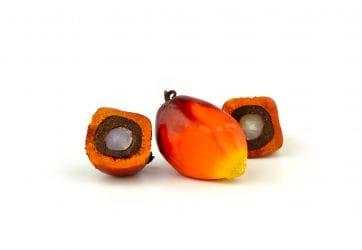 Vruchten van de oliepalm die gebruikt worden voor het maken van palmolie